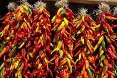 Multi ristras coloridos do pimentão Imagem de Stock Royalty Free