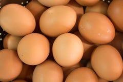 Multi uova Immagine Stock