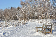Multi-utilisez le journal par la forêt boréale en hiver Photos libres de droits