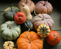 Multi zucche colorate assortite Fotografia Stock Libera da Diritti