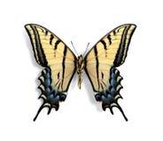 Multicaudatamulticaudata van Papilio (onderkant) stock foto