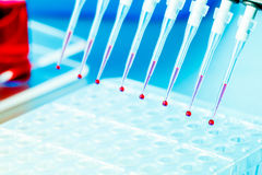Multichannel Pipette. With biological samples Stock Photos