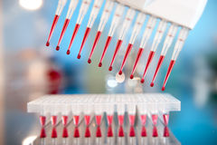 Setting up PCR reaction in the lab Stock Photography