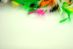 Multicilored feathers on the white background Royalty Free Stock Photo
