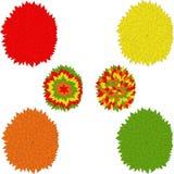 Multicolor деревья, красный цвет, желтый цвет, апельсин, зеленые цвета Стоковая Фотография RF