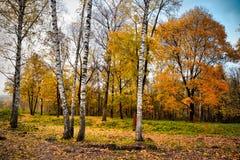 multicolor листья autunm на деревьях стоковое фото rf