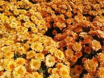 Multicolor мамы падения стоковое фото rf