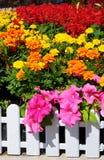 Multicolor Foto de archivo