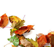 Multicolor autumn dry leafs Royalty Free Stock Photos