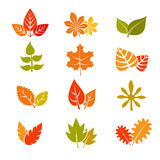 Multicolor autumn leaves flat vector icons. Fall feuille leaf collection Stock Photo