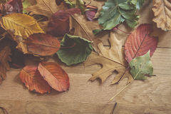 Multicolor autumn leaves Royalty Free Stock Photo