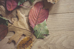 Multicolor autumn leaves Royalty Free Stock Image