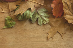 Multicolor autumn leaves Stock Images