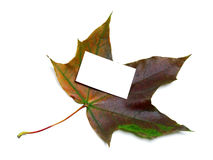 Multicolor autumn maple leaf with white empty price card Stock Photo