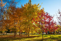 The multicolor autumn trees sunset Royalty Free Stock Photos