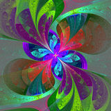 Multicolor beautiful fractal flower on gray background. Royalty Free Stock Photo