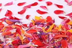 Multicolor bright flower petals Stock Photos
