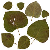 Multicolor dry lilac worn crumpled green leaves Royalty Free Stock Images