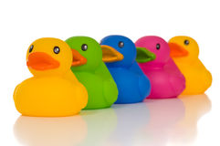 Multicolor Ducks Royalty Free Stock Image