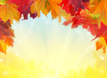 Multicolor fall maple leaves frame Royalty Free Stock Image