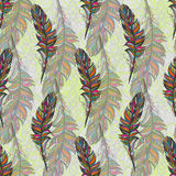 Multicolor feather, isolate. With white background Royalty Free Stock Photo