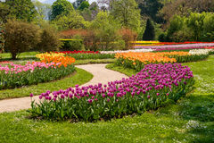 Multicolor field tulips Royalty Free Stock Images