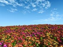 Multicolor flower field Stock Image