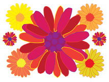 Multicolor flowers Stock Image
