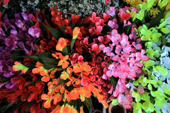 Multicolor flowers Royalty Free Stock Photography