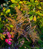 Multicolor Forest Vegetation Stock Photography