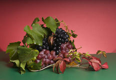 Multicolor grape food Stock Photography