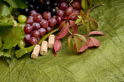 Multicolor grape food Royalty Free Stock Photos