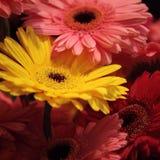 Multicolor herbarium. Bouquet of multicolor herbarium for present stock photos