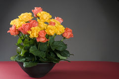 Multicolor holiday  floral roses bouquet Stock Image