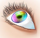 Multicolor human eye. Stock Photos
