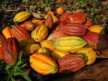 Multicolor kakaowe owoc Obraz Stock