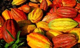 Multicolor kakaowe owoc Zdjęcie Royalty Free