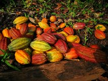 Multicolor kakaowe owoc Obrazy Stock