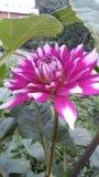Multicolor kwiat zimy sezon obraz royalty free