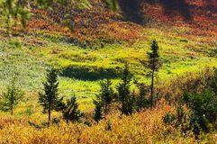 Multicolor landscape. Altay Stock Photography