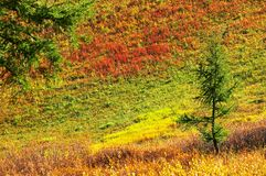 Multicolor landscape. Altay Royalty Free Stock Photo