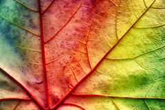 Multicolor leaf with texture Stock Images