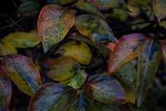 Multicolor leaves lit by November rain stock photography