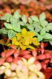 Multicolor liście zdjęcie royalty free
