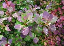 Multicolor liście z wodnymi kroplami Zdjęcia Royalty Free