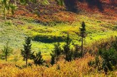 multicolor liggande Arkivbild