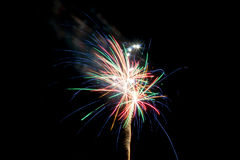 Multicolor palm shaped firework. On black background Stock Images