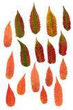 Multicolor pressed decorative leaves in geometry forms. Bright red and yellow multicolor pressed decorative leaves in geometry forms Stock Image