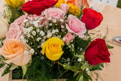 Multicolor roses in the foreground. Arrangement of multicolor roses in the foreground with pastel shades stock photos