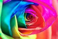 Multicolor se levantó Imágenes de archivo libres de regalías